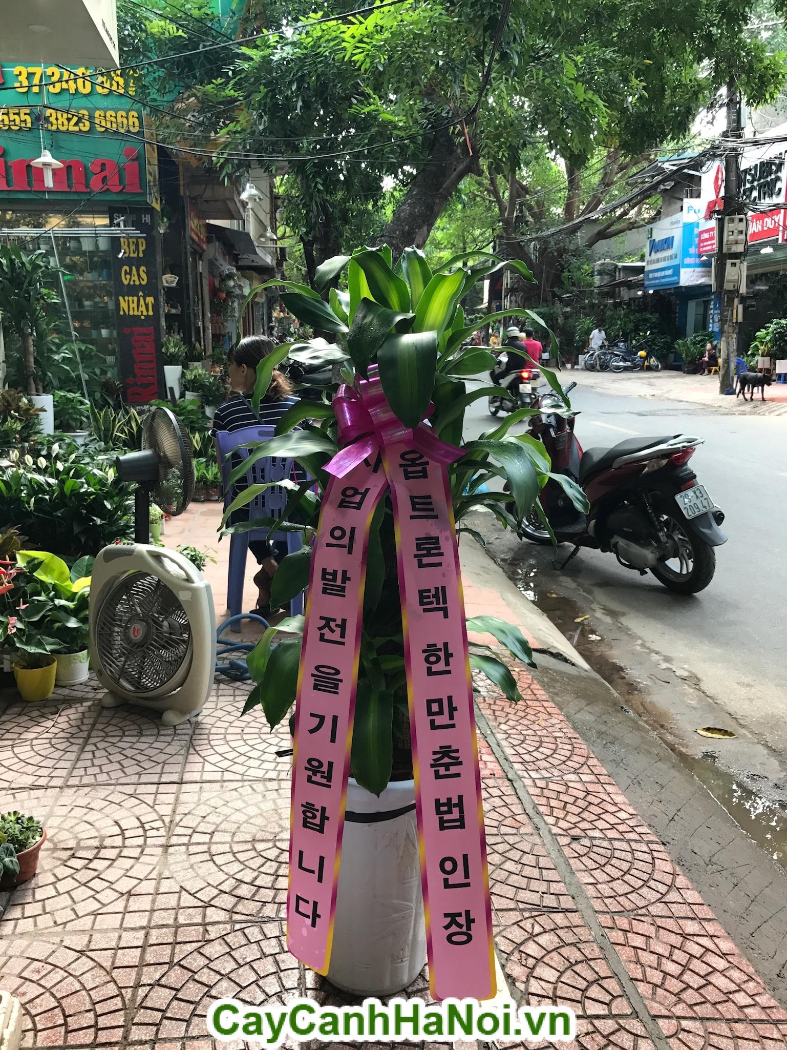 Cho thuê cây cảnh uy tín tại Hà Nội